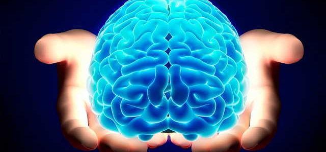 cervello-1_opt-640x300